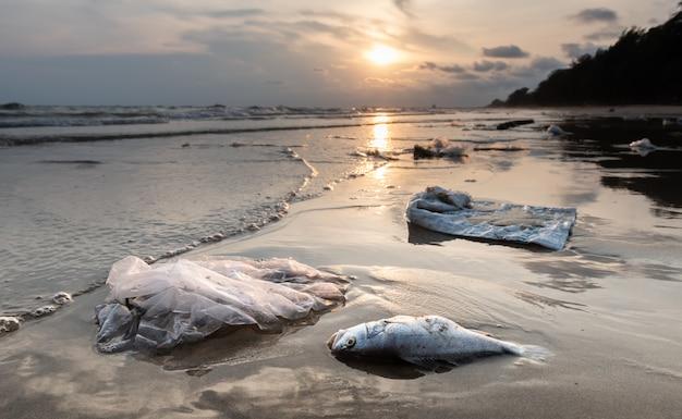 Morte peixe e ambiente de poluição de plástico.