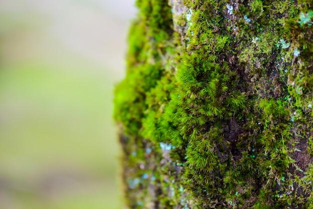 Mos verde na árvore