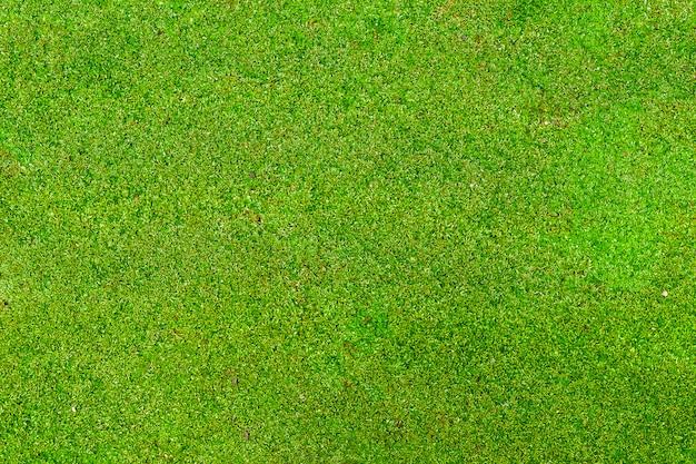 Mos verde para o fundo.