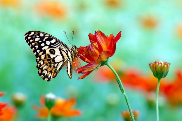 Mosca da borboleta na natureza da manhã.