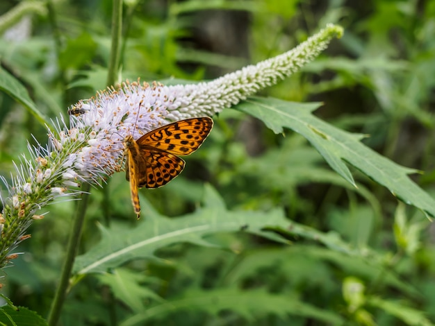 Mosca de borboleta para as flores no parque
