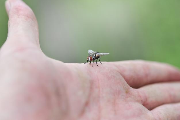 Mosca de casa na mão de pele humana