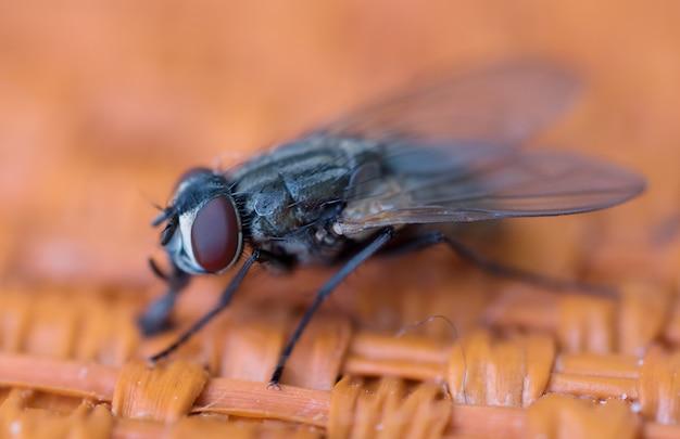 Mosca de inseto