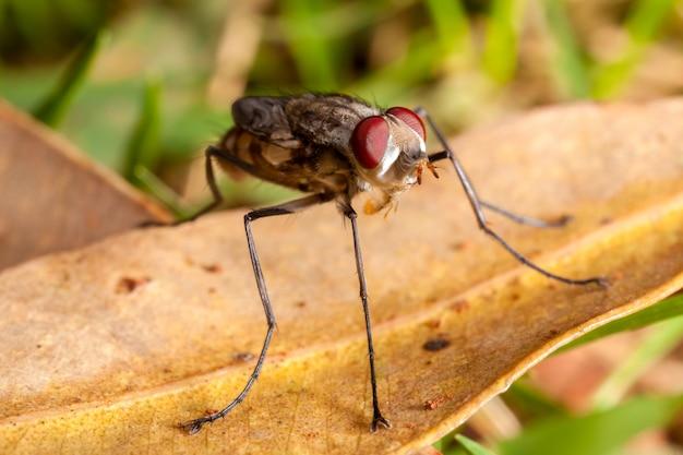 Mosca doméstica recém-nascida nova com asas fechadas - bebê da mosca