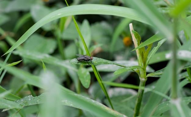 Mosca-garrafa comum sentada na folha verde na selva