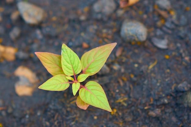 Mosca verde ou inseto na folha da árvore pequena no fundo do solo do borrão