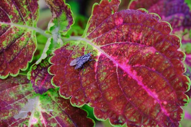 Moscas de olhos vermelhos em fundo de folhas