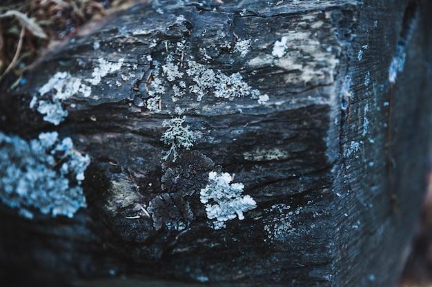 Moss coberto de casca de árvore