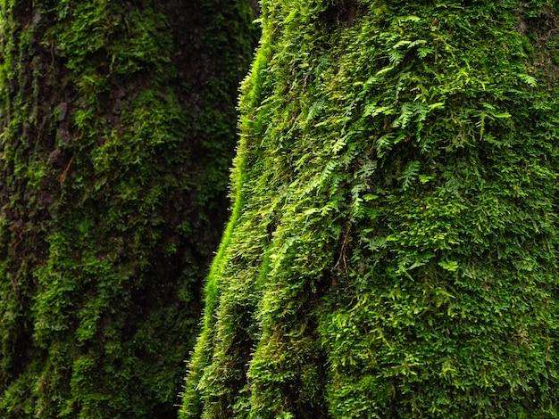 Moss e samambaia na floresta tropical