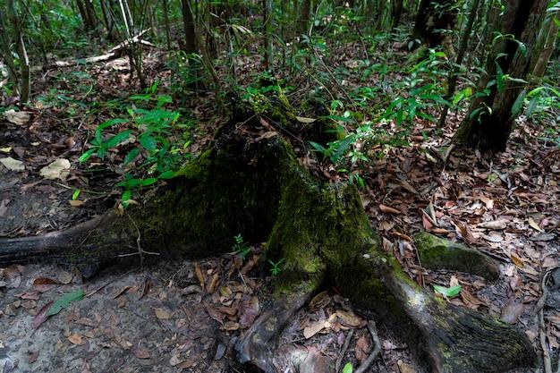 Moss na árvore morta
