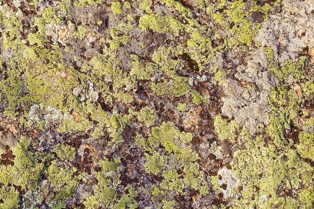 Moss na pedra grande.
