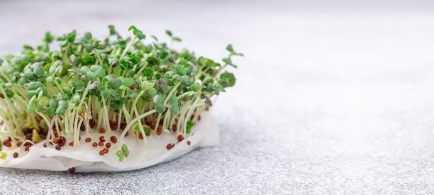Mostarda no peitoril da janela. microgreens crescendo. vegan e conceito de alimentação saudável. fechar-se. banner horizontal. copie o espaço para o seu texto