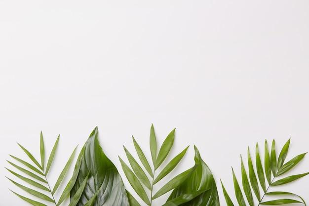 Mostra horizontal de lindas folhas verdes na parte inferior do tiro, espaço em branco da cópia para o seu conteúdo promocional ou anúncio