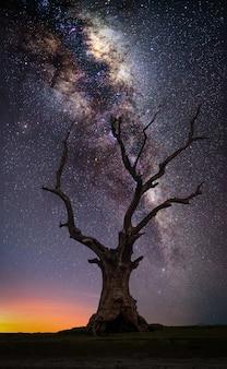 Mostre em silhueta a árvore grande inoperante no monte com via látea no nascer do sol.