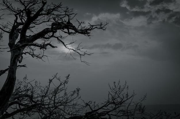 Mostre em silhueta a árvore inoperante no céu dramático escuro e nas nuvens brancas para a morte e a paz. dia das bruxas . desespero e conceito sem esperança. triste da natureza. morte e emoção triste