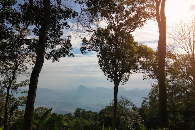 Mountainscape com árvore na floresta