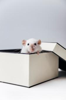 Mouse fofo em um fundo claro