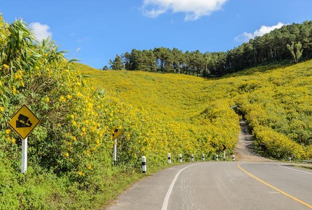 Moutain de florescência selvagem do girassol mexicano no dia ensolarado com a estrada da curva