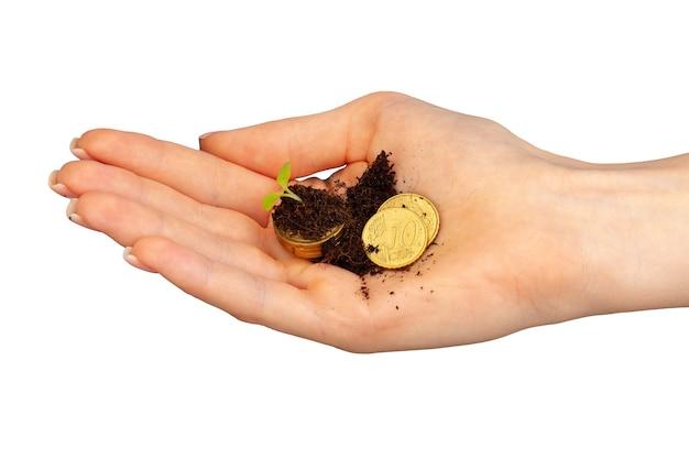 Mudas cultivadas em uma pilha de moedas na palma feminina
