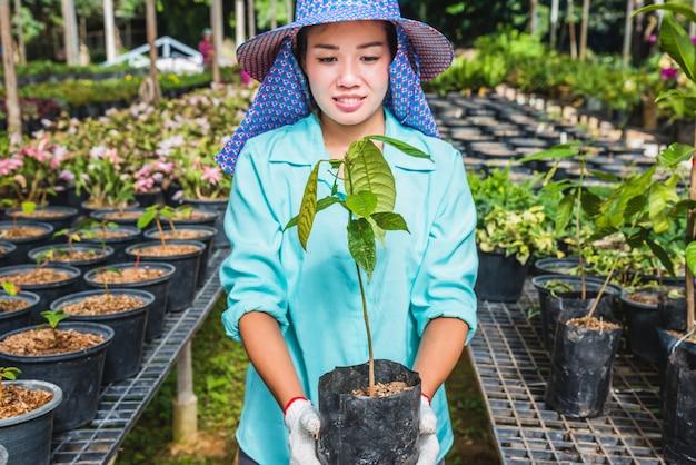 Mudas de flores com efeito de estufa. a mão da jovem mulher segurando uma planta de árvore da flor em uma panela na mão, agricultura jardinagem.