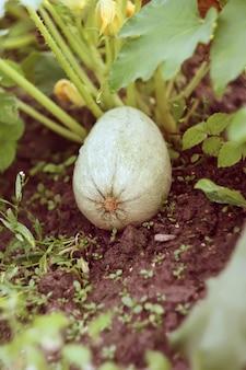 Mudas de medula vegetal em uma cama vegetal.