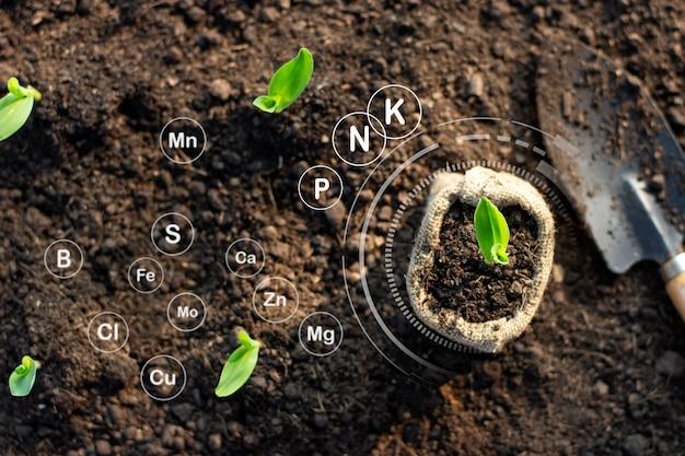 Mudas de milho crescem em solo fértil e possuem ícones de tecnologia sobre minerais no solo adequado para plantações.