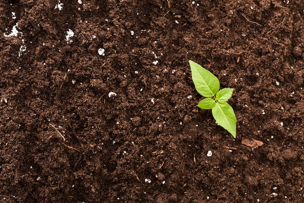 Mudas de planta verde superfície vista superior texturizada