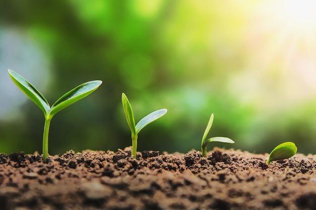 Mudas de plantas crescendo passo no jardim