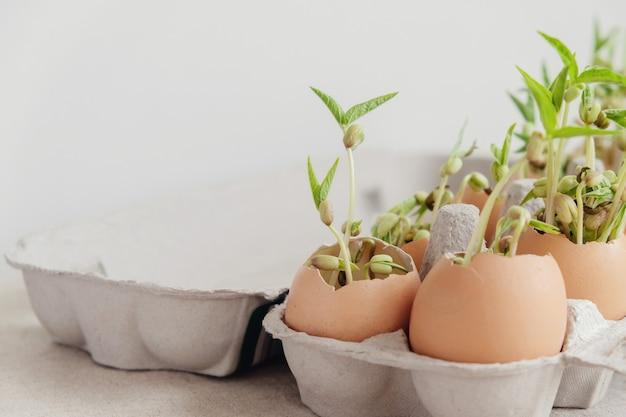 Mudas de plantas em cascas de ovos