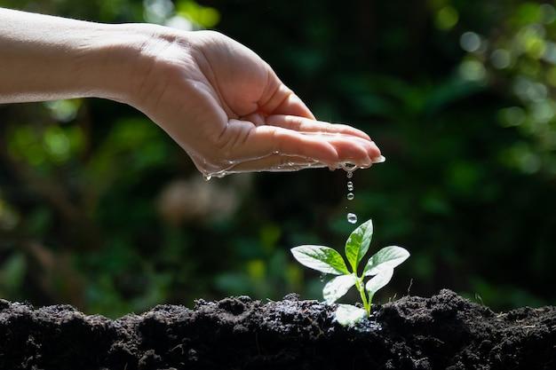 Mudas de plantas jovens de rega manual para o meio ambiente e ecologia