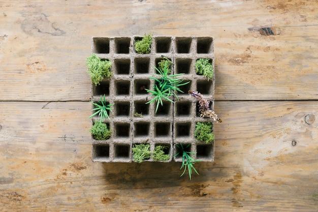 Mudas de plantas pequenas na bandeja de turfa contra banco de madeira