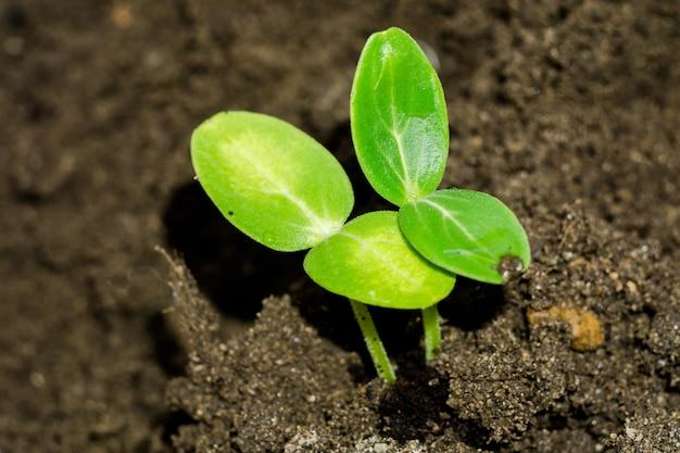 Mudas de plantas verdes