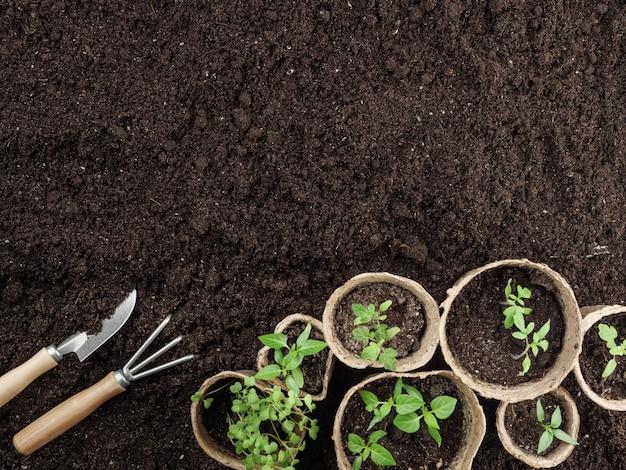 Mudas de turfa e ferramentas de jardim estão no chão. vista do topo. copie o espaço.
