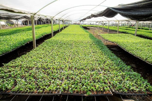 Mudas de vegetais orgânicos na trama.