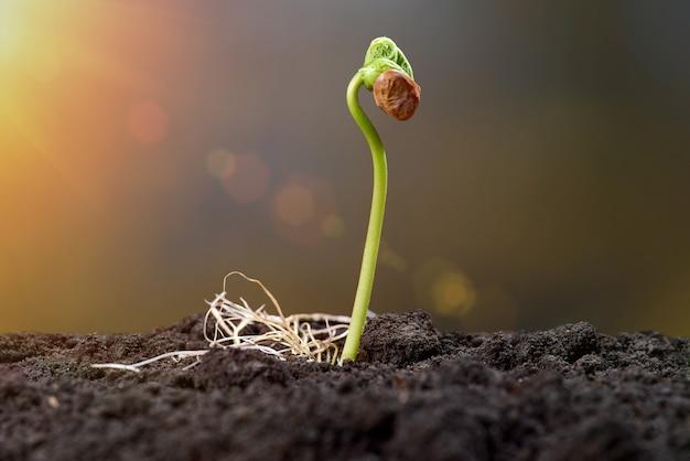 Mudas e broto de planta crescem passo sobre parede verde. jovens brotam à luz do sol