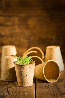 Mudas em vasos que crescem em turfa biodegradável