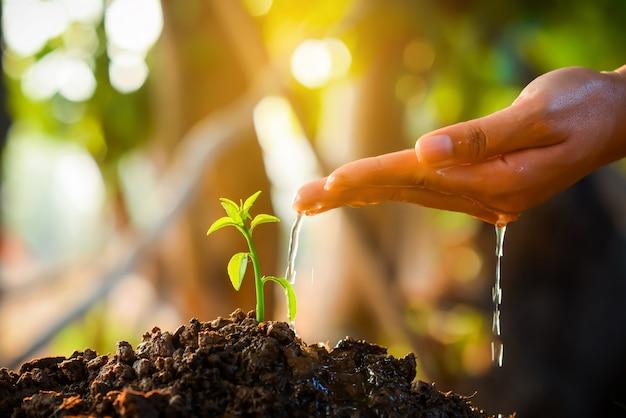 Mudas estão crescendo no solo com a luz solar.