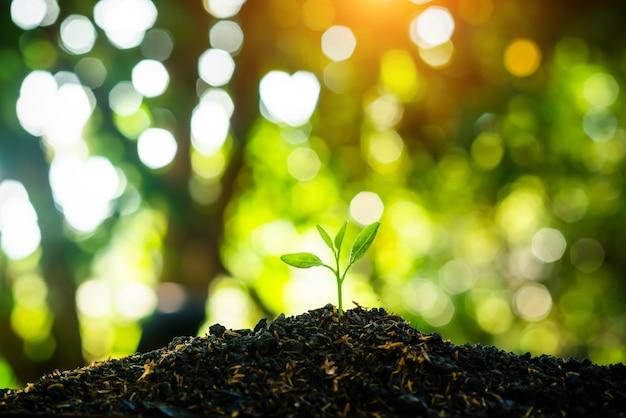 Mudas estão crescendo no solo com o pano de fundo do sol