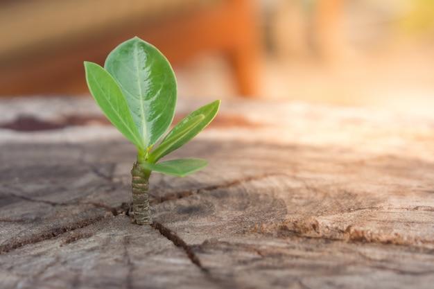 Mudas fortes crescendo na árvore tronco central