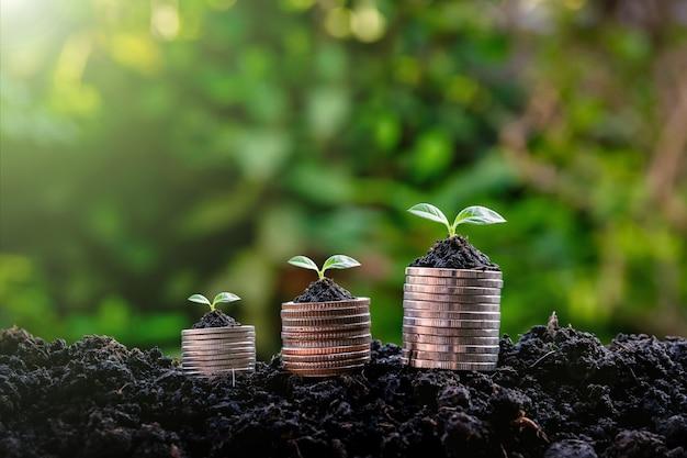 Mudas no investimento em crescimento da planta de dinheiro, lucro com o conceito de negócio em crescimento