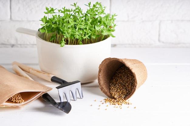 Mudas, plantando sementes em casa. mudas precoces, cultivadas a partir de sementes em caixas no peitoril da janela