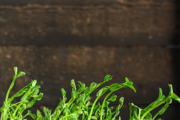 Mudas verdes de grãos, micro verduras (mudas no solo, regadas)