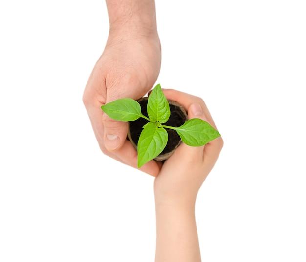Mudas verdes em vasos em mãos humanas isoladas