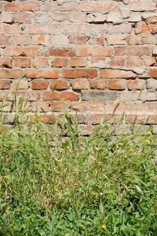 Muita grama verde crescendo em frente a uma velha parede de tijolos