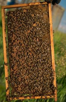 Muitas abelhas em uma moldura de madeira com favos de mel.