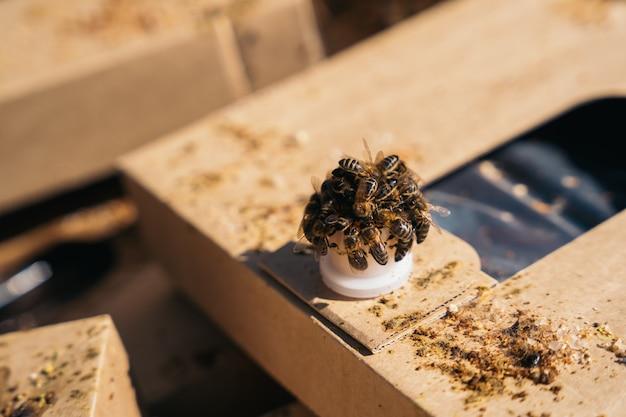 Muitas abelhas que comem xarope para atraí-las para o favo de mel. apicultura.