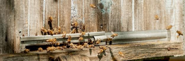 Muitas abelhas retornando à colmeia e entrando na colméia com o néctar floral coletado