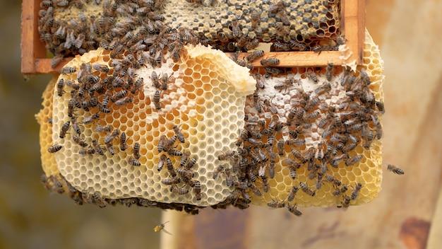 Muitas abelhas trabalham em favos de mel