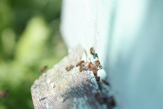 Muitas abelhas voam para dentro da organização de abelhas do conceito de colmeia