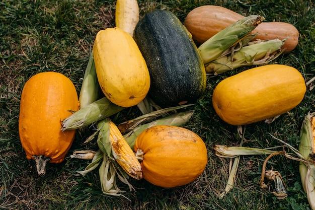 Muitas abóboras diferentes e milho na grama verde colheita de abóboras no outono